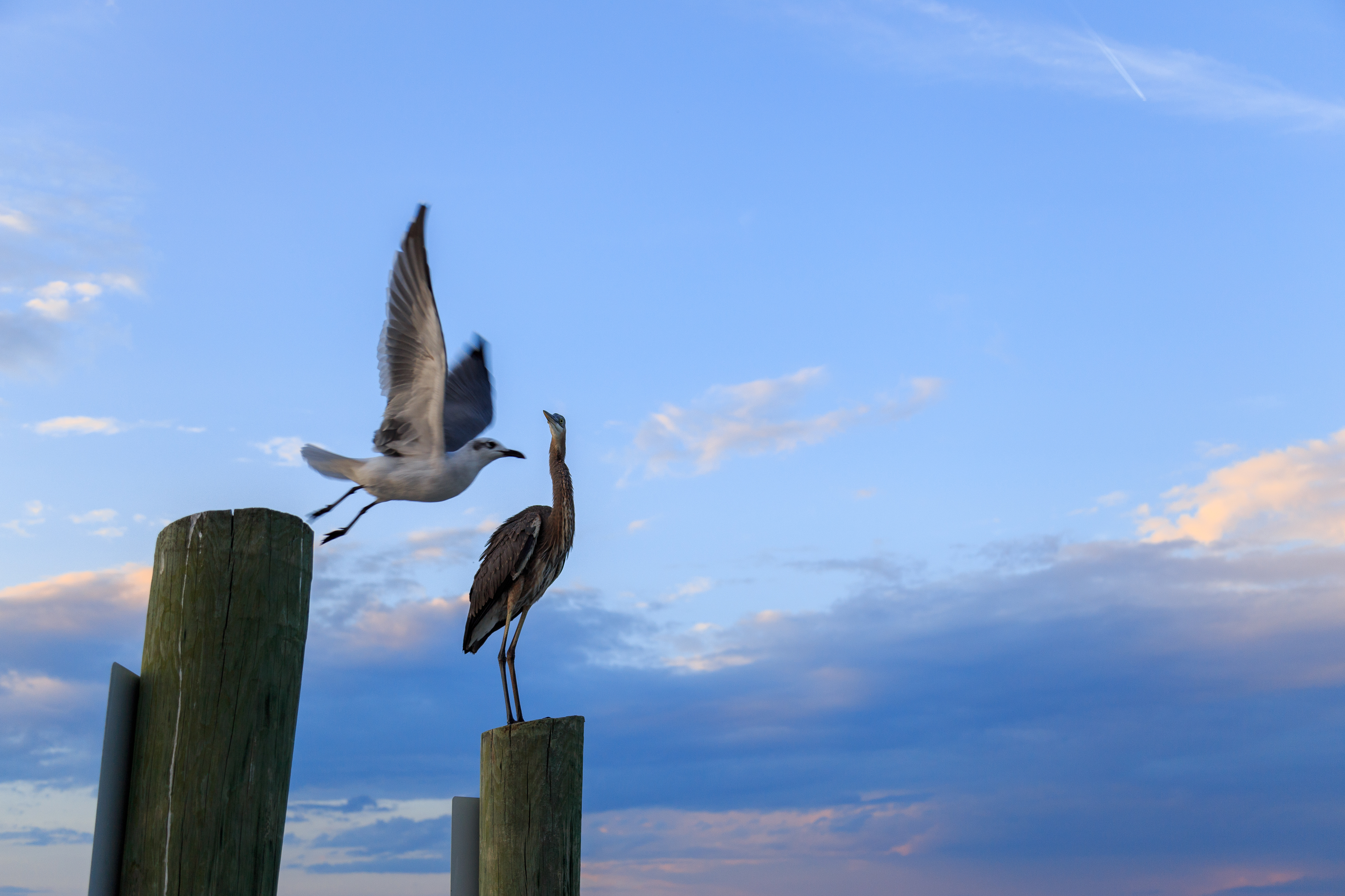 Beachwalk 151 | Photo 30