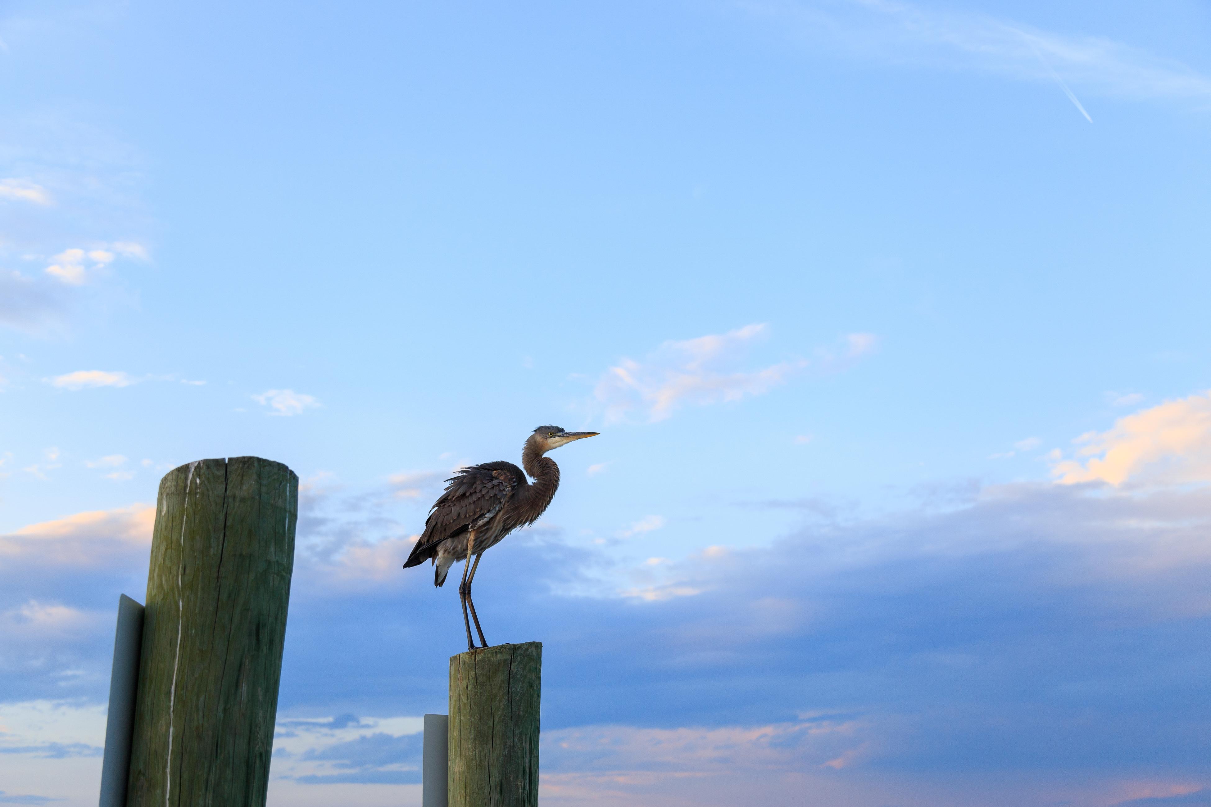 Sandhill Crane 16 | Photo 54