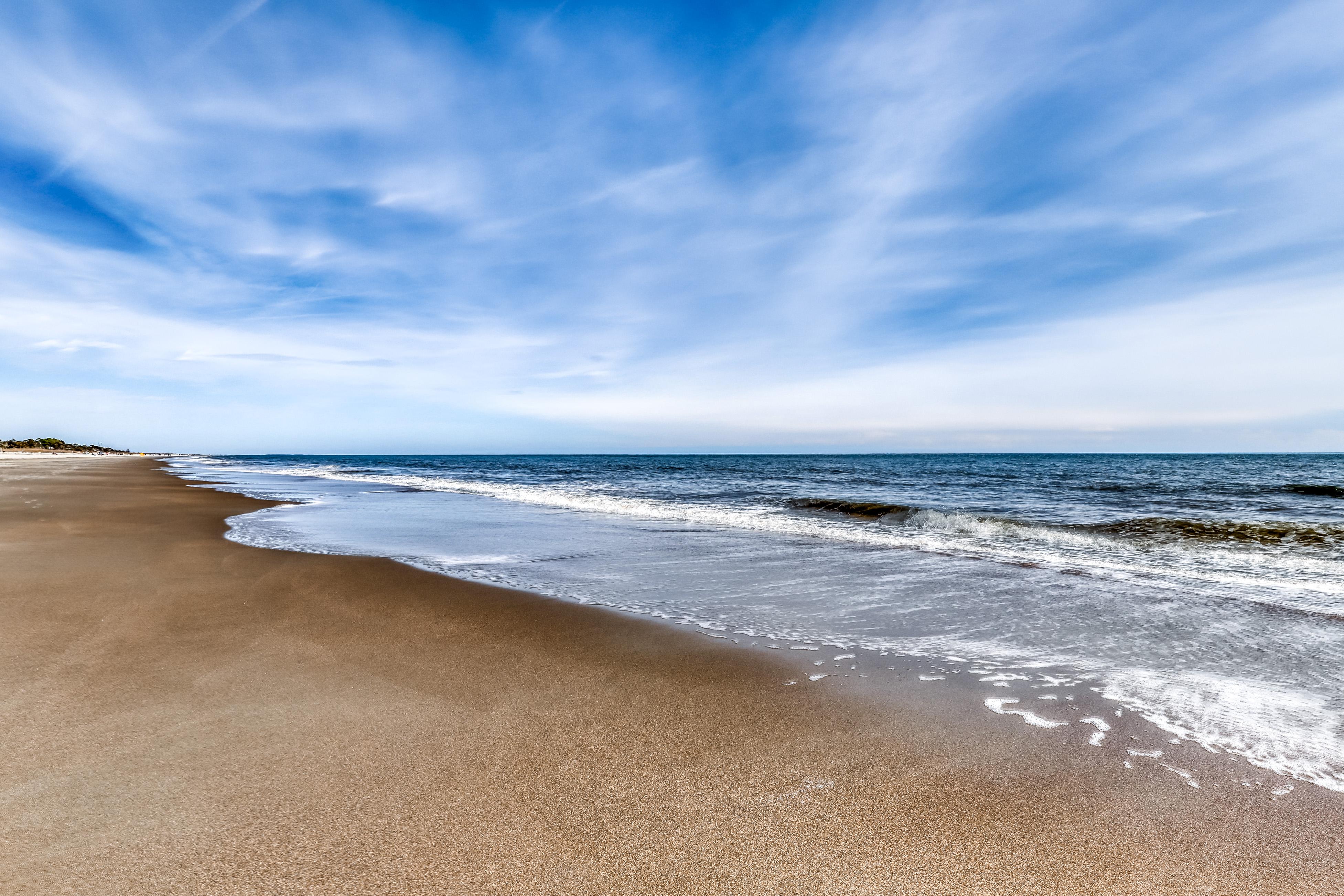 Sand Dollar | Photo 42