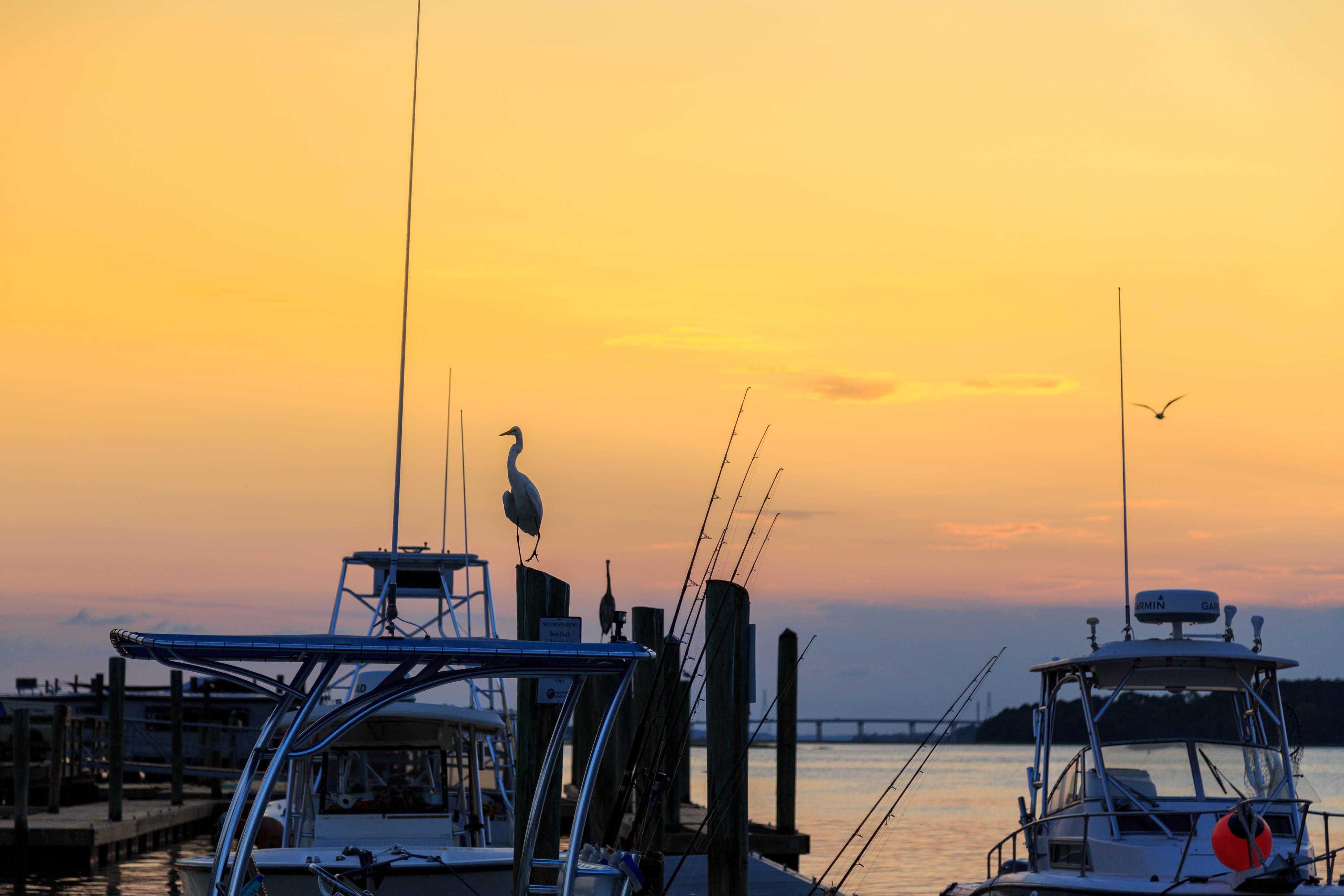 Night Heron 56 | Photo 23