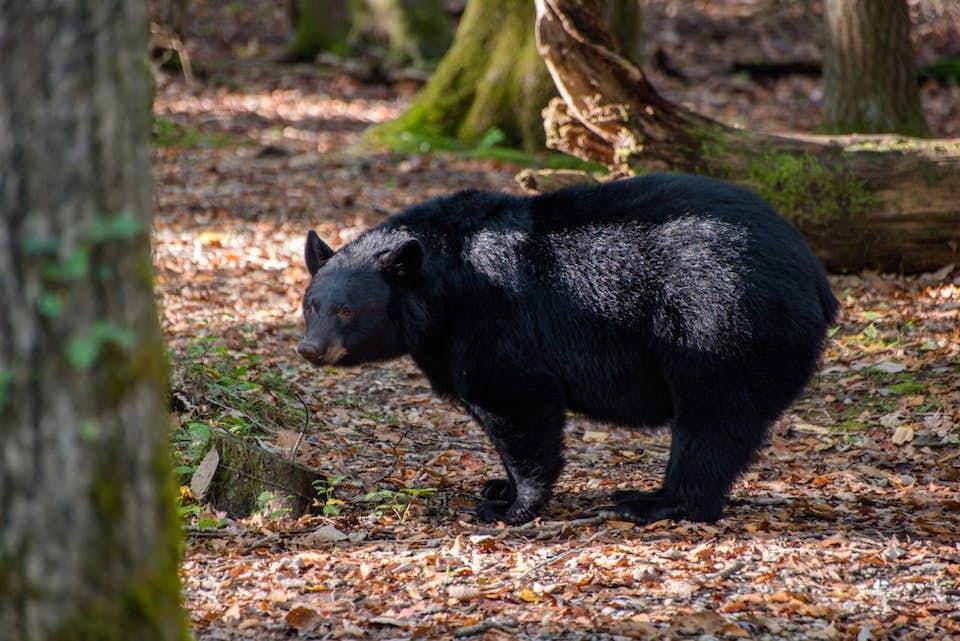 Fox Hollow Cabin 3 Bd Vacation Rental In Sevierville Tn